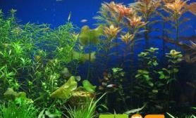 水草缸中常见微生物问题