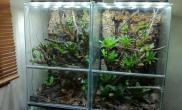 雨林水陆生态缸31