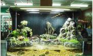 水族箱造景新见台湾的水草缸