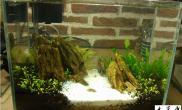 学习造景一个月水草缸新手第一个缸水草缸轻拍 (30cm)