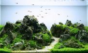 青龙石迷你矮简单做出群山效果水草缸设计造景