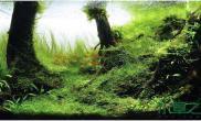 水草造景草缸造景图