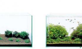 水草造景佗草和灯鱼的简约清新---开缸篇