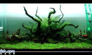 沉木迷你矮珍珠、牛毛毡、南美草皮、绿片苔砂青龙石60CM尺寸设计