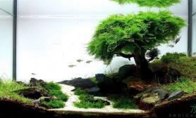 水草造景比赛获奖作品水草缸经验分享