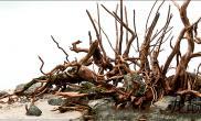 自然风格水景——建缸到成景全程