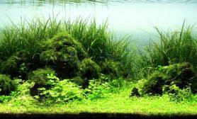 草海欣赏草缸作品集