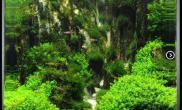水族箱造景水草造景---水的秘密