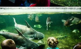 传说中柏林动物园的水族馆