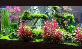 这样的颜色搭配水草缸也是美美的