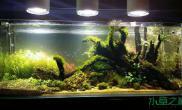 一个半月了水草缸水终于清了鱼缸水族箱