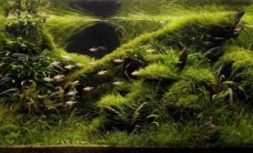 水草缸造景沉木水草泥化妆砂青龙石90CM尺寸设计103