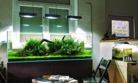 水草缸造景沉木水草泥化妆砂青龙石150CM及以上尺寸设计50