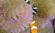 什么是海水鱼(图)