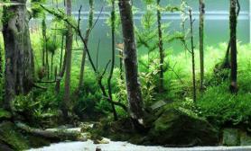水草造景作品:水草造景(116cm)-101