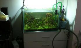 [原创]60 40 40草缸,水草状态不错,刚装上金卤灯水草瞬间变绿