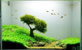 水草造景《司马滩》莫斯树成景记