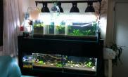 水族箱造景创意无限水草缸虾缸也可以这样