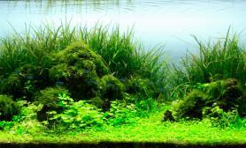 ADA2012世界水草造景比赛作品赏析