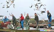 太湖放鱼节圆满落幕共放流鱼苗60多万公斤(图)