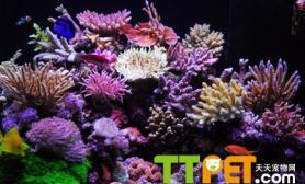 珊瑚礁缸中加钙的方法