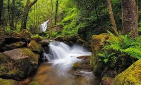 分享一个草缸树林森林石头景的详细造景过程(重点是几个造景小技巧)
