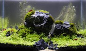 水草缸造景沉木水草泥化妆砂青龙石45CM及以下尺寸设计55