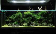 雨林水陆生态缸42