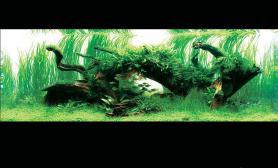 水族箱造景草缸