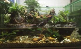 我第一个水陆缸水草缸请各位多多指教鱼缸水族箱