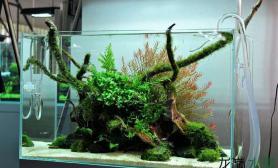 水沉木是什么