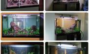 简单布景水草缸简单成景水草缸一切归于简单