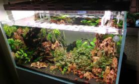 新开的90缸阴性草缸鱼缸水族箱