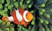 鱼缸水面有泡要引起重视