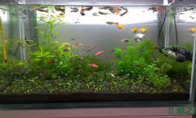 新开的草缸水草缸给提点意见水草缸帮我把它弄的更漂亮些