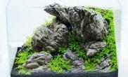 水草造景小型鱼缸造景