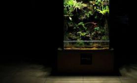 可以当屏风使用的生态雨林缸