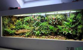 欣赏一下超大雨林缸的魅力