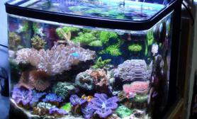 海水缸养水的注意事项