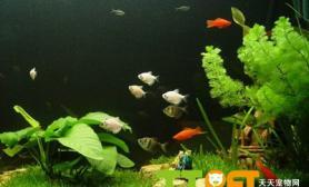 鱼缸中出现藻类的常见原因