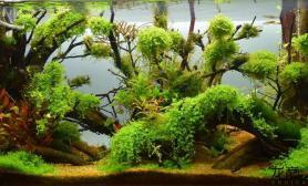不一样的沉木造景