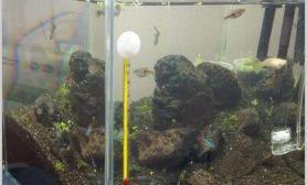 鱼缸造景昨天翻缸了水草缸不负责任的说一句 很有可能成不了景
