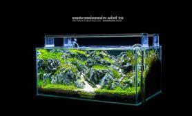 泰国水草造景比赛精彩照片