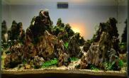 分享一张松皮石的造景水草缸大家给点意见水草缸谢谢