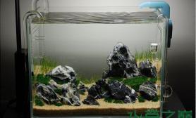 水族箱造景一个ADA小缸   沙夏之丘