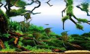 悬浮树造景