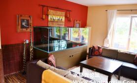 1米5的七彩神仙水草缸欣赏水草缸含开缸过程