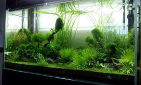 水草生长最好的时期