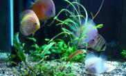 海水水族箱珊瑚砂的巧用(图)