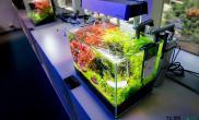 30小缸美景水草缸重在养草鱼缸水族箱